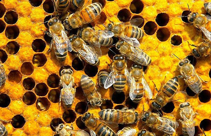 Программы дотаций для пчеловодов