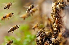 Пчеловоды получат специальную бюджетную дотацию в 2020 году